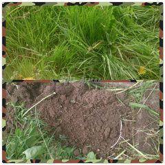grass garden nature photography collage