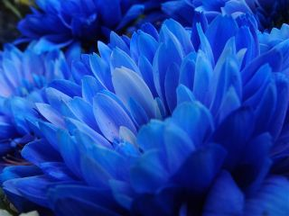 nature blue flower spring colorful summer