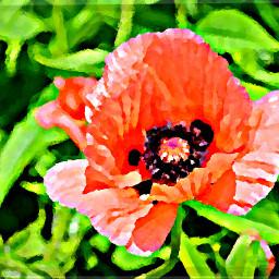 colorful travel color splash flower