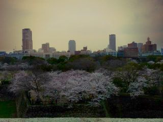 photography japan spring nature cherry blossom flower