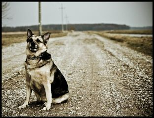 emotions pets & animals photography wapontheroad