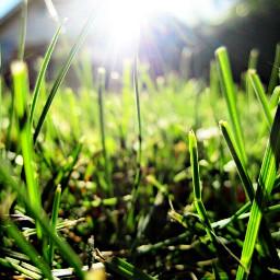 grass summer edit green sun