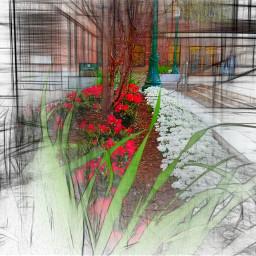 pathways photography spring university campus flowers