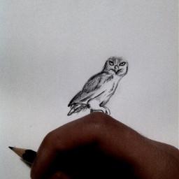 my draw drawn drawing art artist bestdrawing 3d 3ddraw pencil owl bird