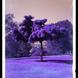nature trees wappurple