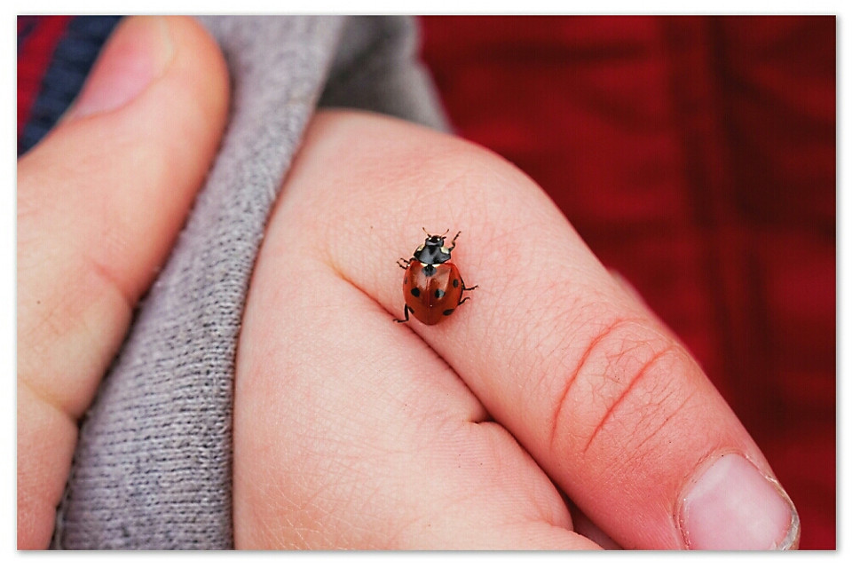 First found and cherished ladybug of the year; Spring has arrived!!!